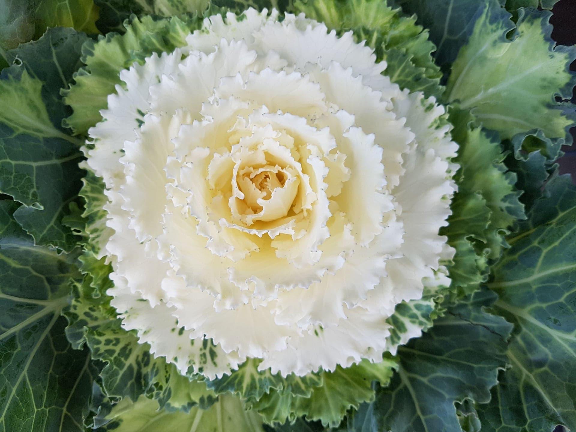 Flowering 2